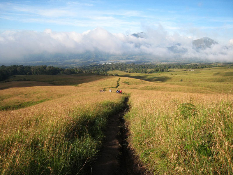 Savannah grass tall of mount Rinjani