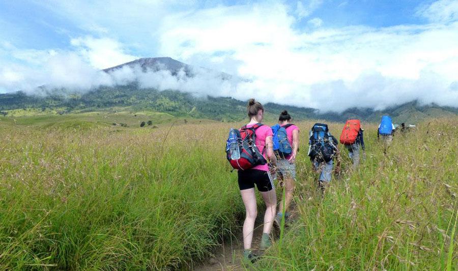 The Savannah grass tall qat Sembalun Lawang altitude 1500 m - Trekking Rinjani