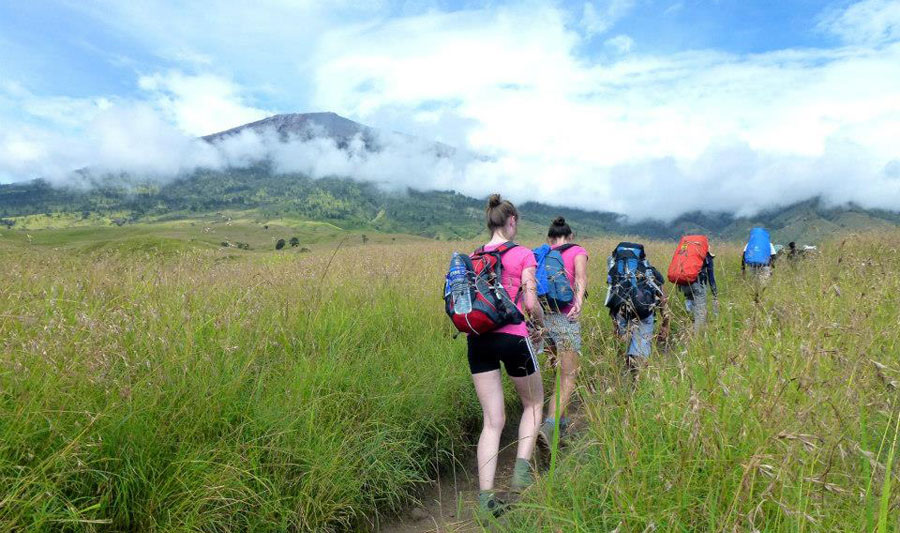 The Savannah grass tall qat Sembalun Lawang altitude 1500 m - Trekking Rinjani