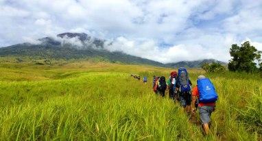 Savanna Grass Sembalun Lawang altitude 1500m - Trekking Rinjani