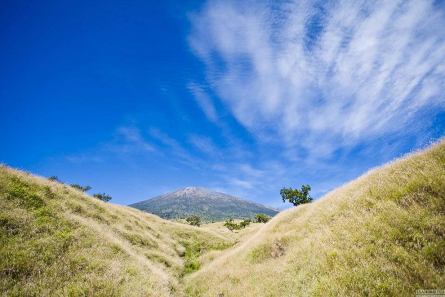 Savannah Grass Sembalun Lawang altitude 1100m - Trekking Rinjani